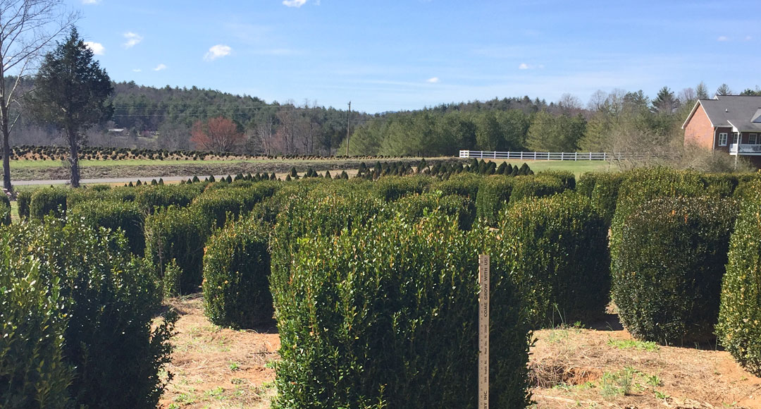 C G Nursery Is A Family Owned Located In The Beautiful Blue Ridge Mountains Of Western North Carolina We Began Our Business 1961 Growing